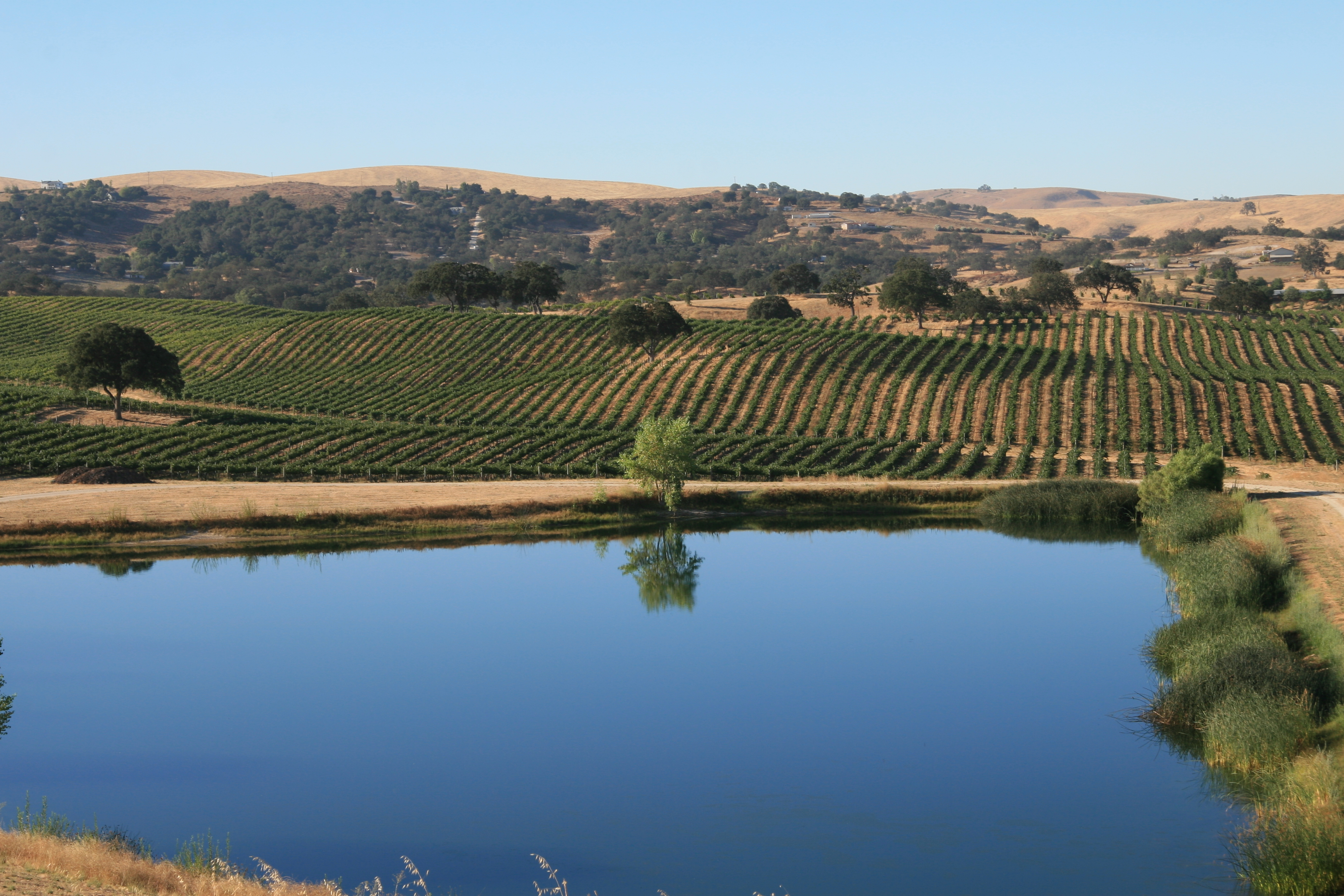 Photo of vineyard with dam in foreground by Phil Bourke
