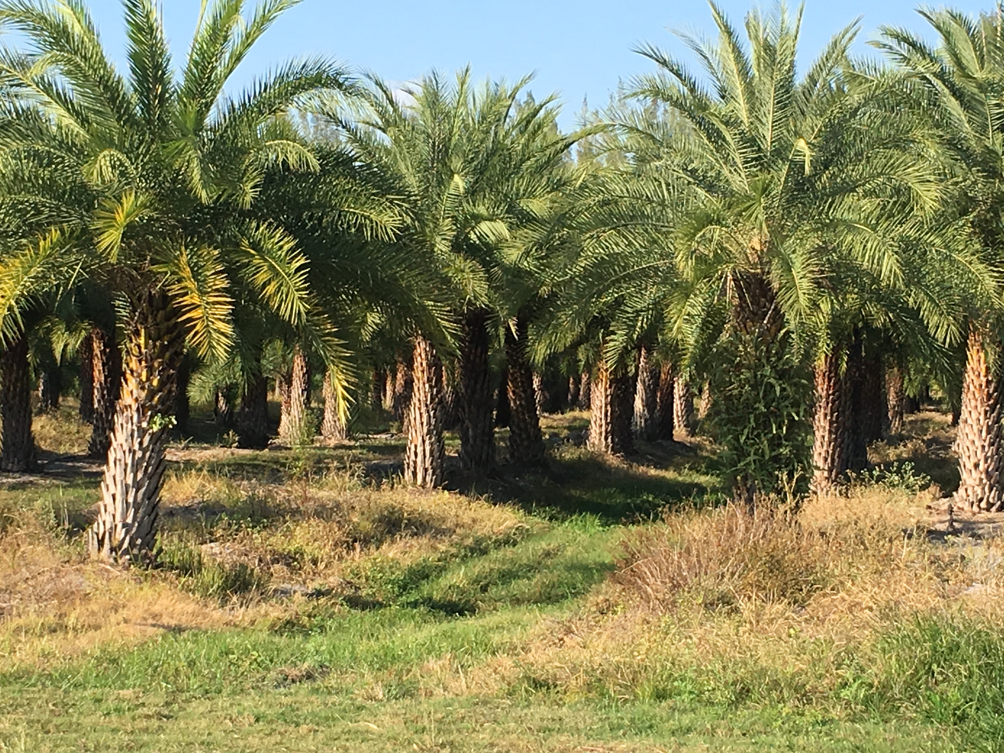 Photo of Palm Plantation by Phil Bourke