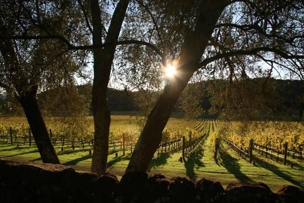 Photo of vineyard near sunset by Phil Bourke